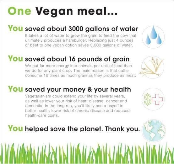 One vegan meal...